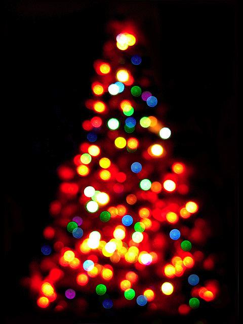 Merry Bokeh Christmas Christmas Photography Christmas Lights Beautiful Christmas Trees