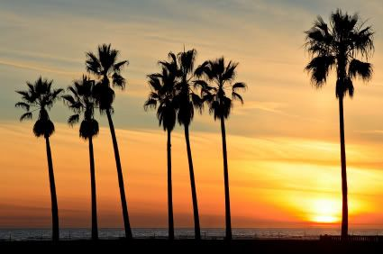 California Beach Palm Trees