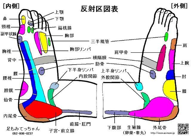 反射区図表(足ツボ図)側面
