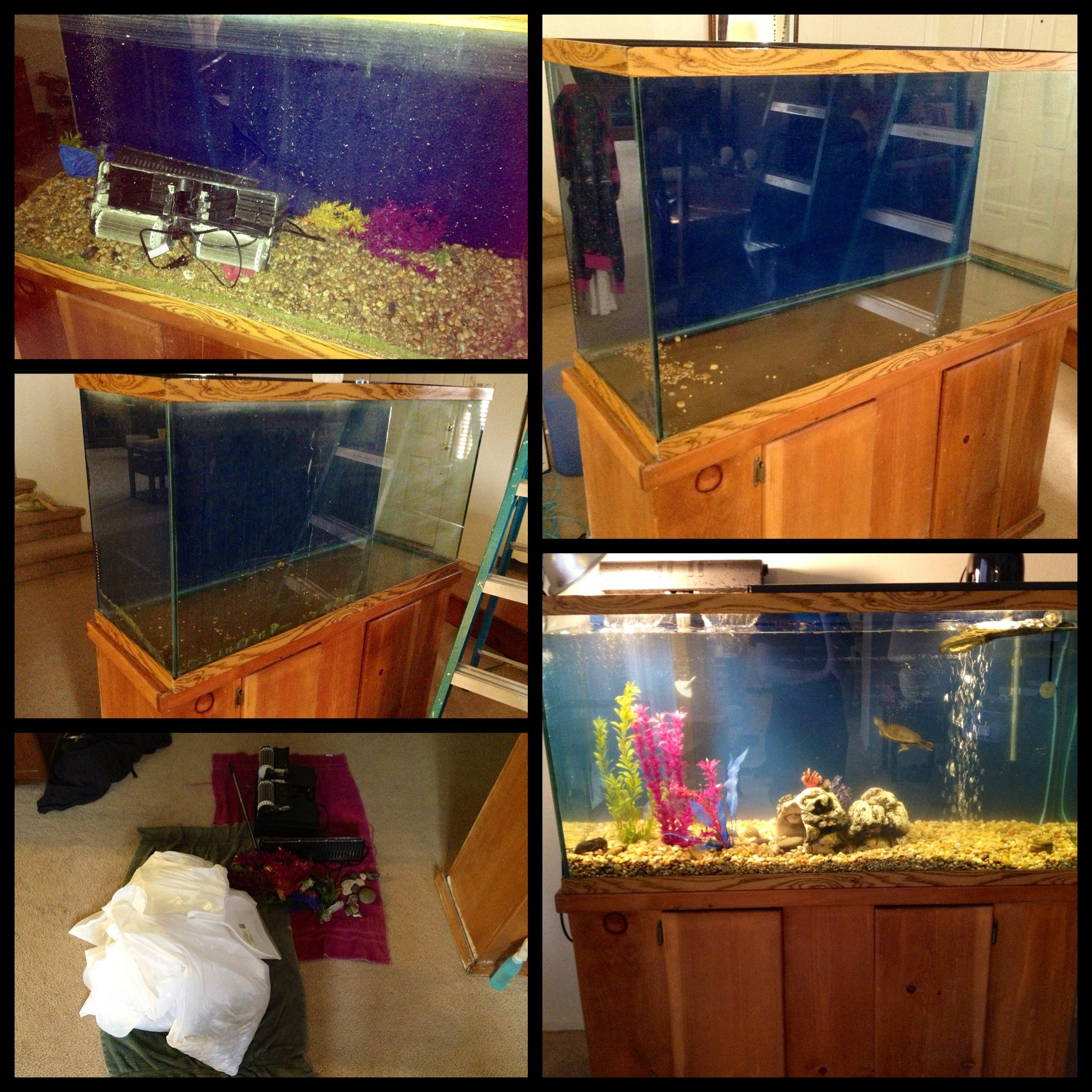 I bought this 75 gallon tank off of Craigslist It took me about 6