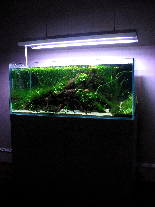 0dd895c9d4311d5e741d4b7d93284b95 Frais De Aquarium Avec Meuble Schème