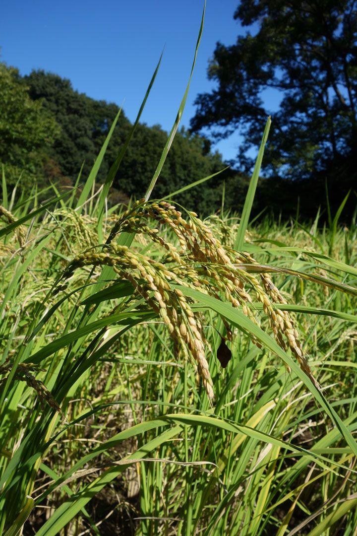 「国産農産物が安全」だと思っているのは日本人だけ!? | 日刊SPA!