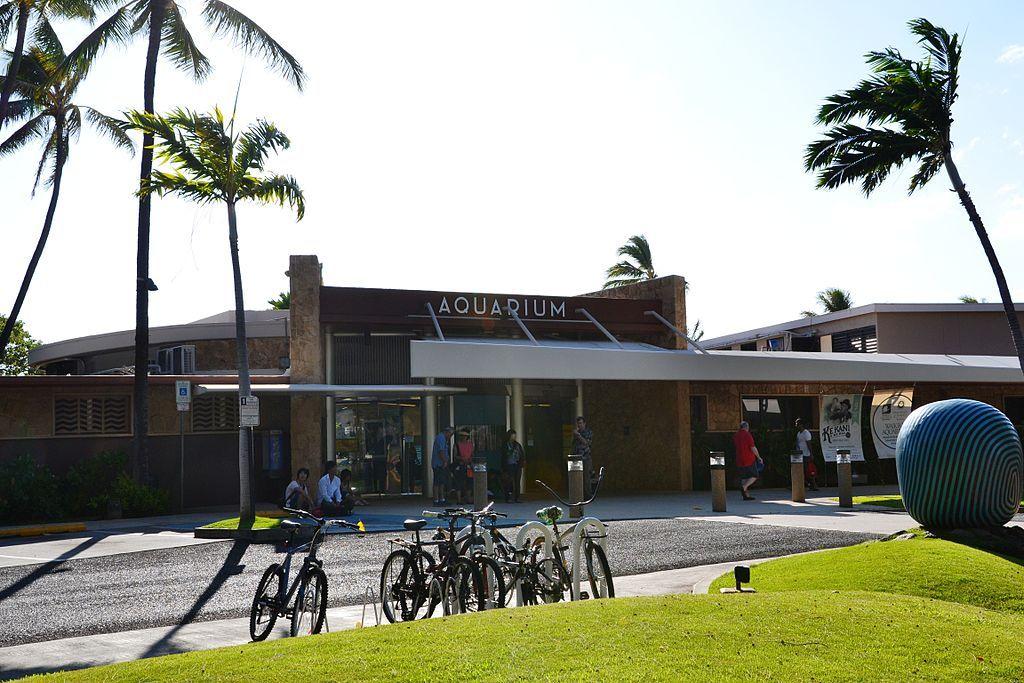 Waikiki Aquarium is an institution of the marine sciences