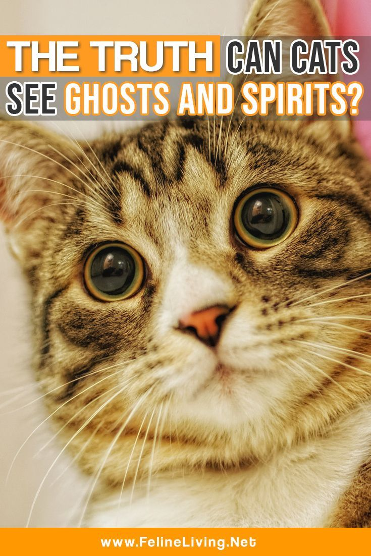 Can Cats See Ghosts and Spirits? Can cats see ghosts