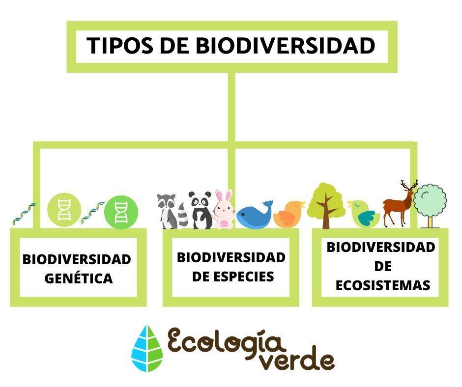 Biodiversidad Esquema Busqueda De Google Tipos De Ecosistemas Perdida De Biodiversidad Conservacion De La Biodiversidad