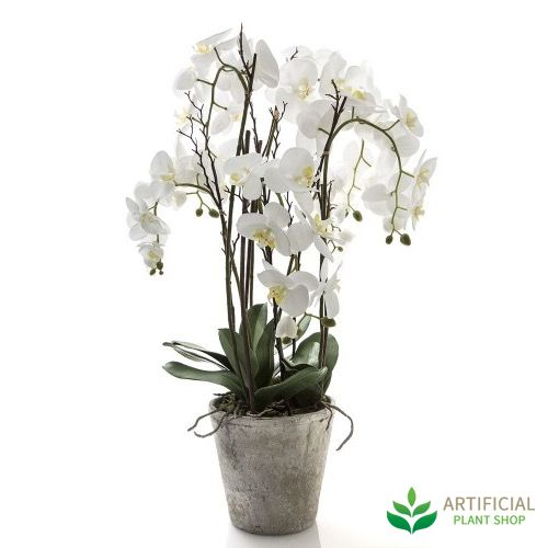 Artificial Orchid In Australia This Stunning Large White Phal Stands 80cm Tall Terracotta Pot Stock Now At Plant