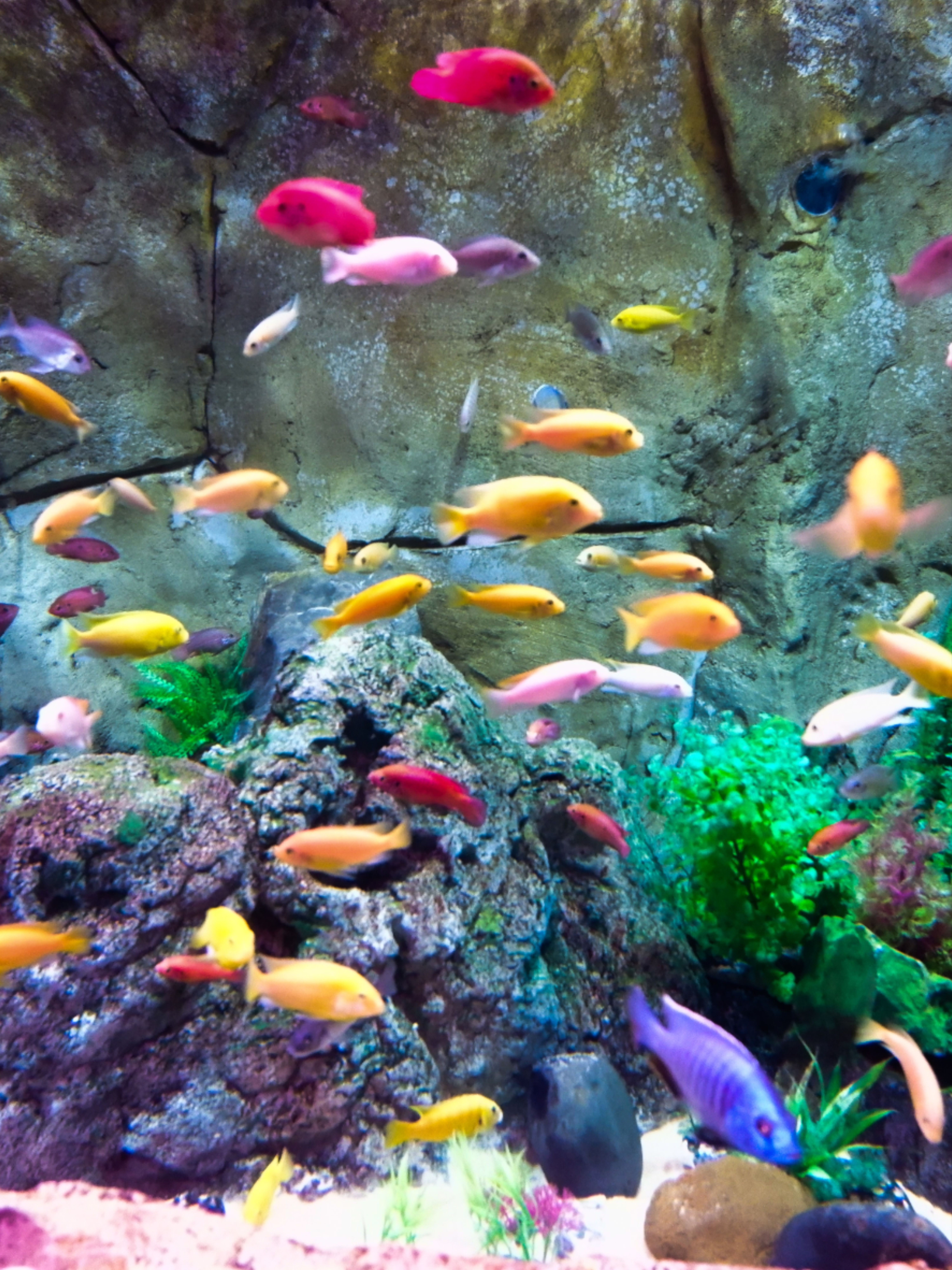 aquarium zubehör shop