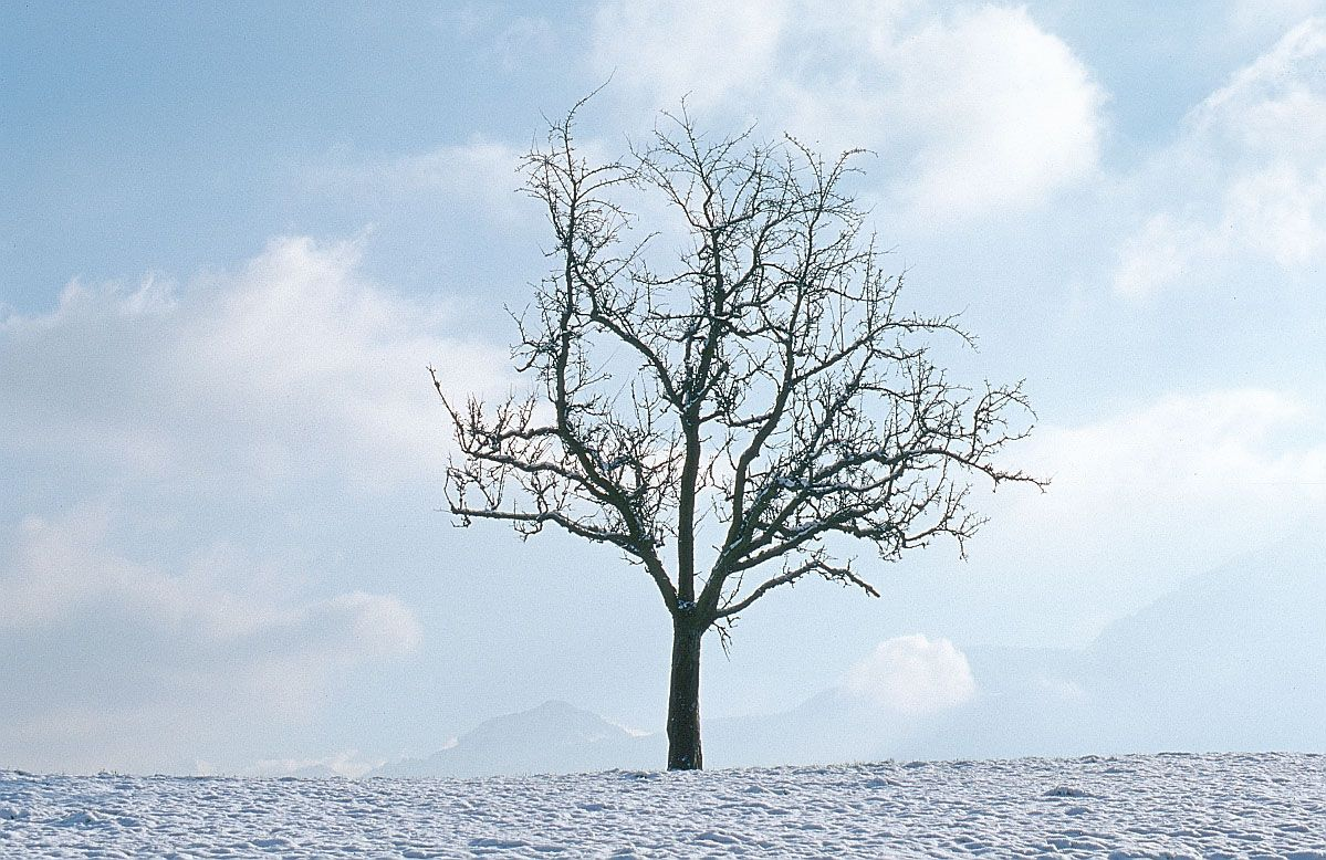 Cathy spencer author ode to a winter tree winter trees