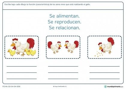 Fichas Para Imprimir Para Niños De Primaria Caracteristicas De Los Animales Actividades De Aprendizaje Fichas
