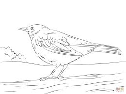 Resultado De Imagen Para Mirla Dibujo Mirlo Paginas Para Colorear Plantilla De Aves