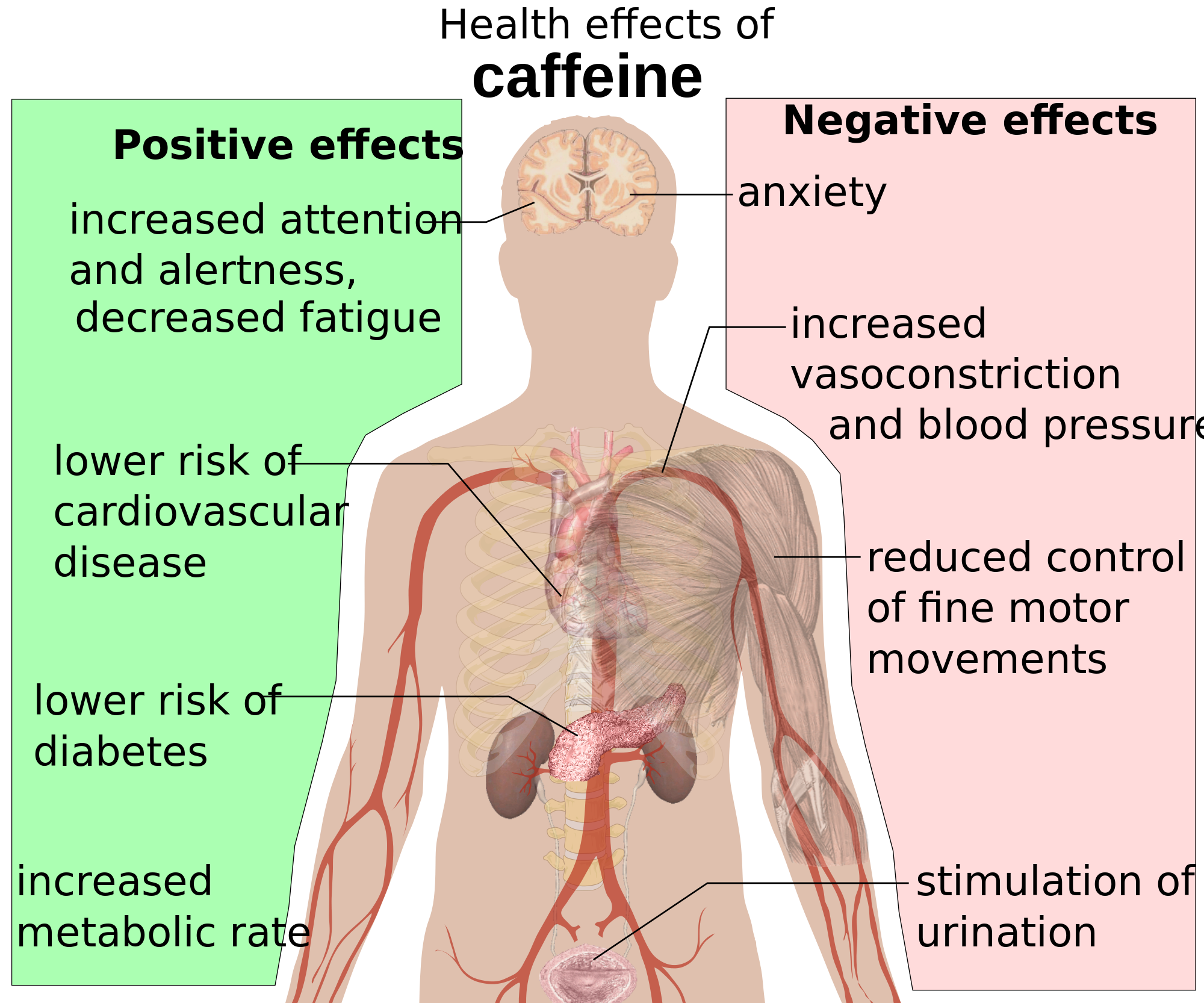Positive Effects: increased attention and alertness, decreased ...