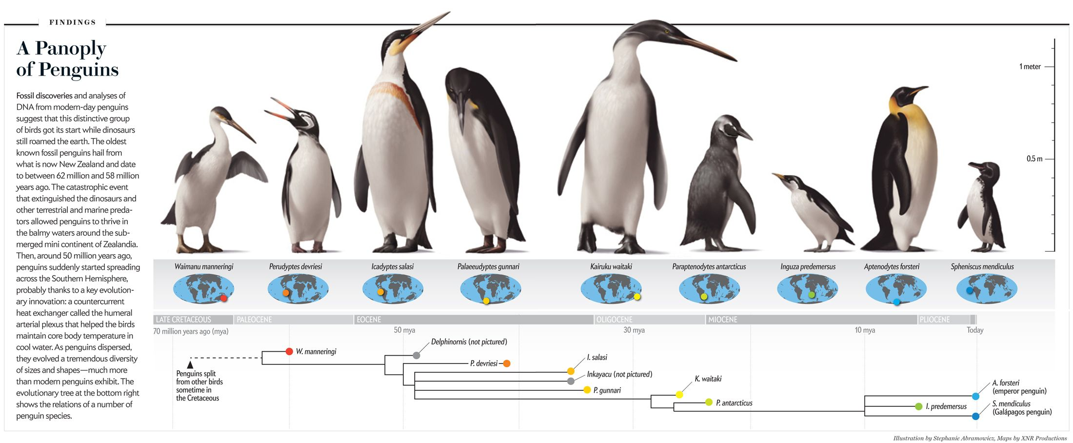 Fossil Finds Trace The History Of Penguins Prehistoric Animals Penguins Prehistoric Creatures