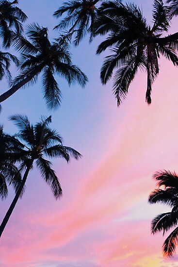 'Beautiful Pink Sunset Palm Trees' Photographic Print by newburyboutique