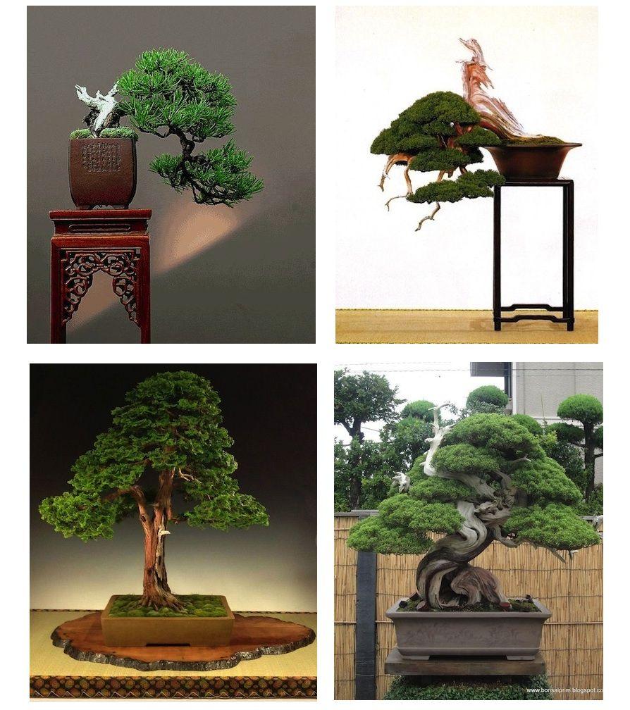 Stunning #bonsai image, feel free to share it! #bonsaiempire http://www.bonsaiempire.com