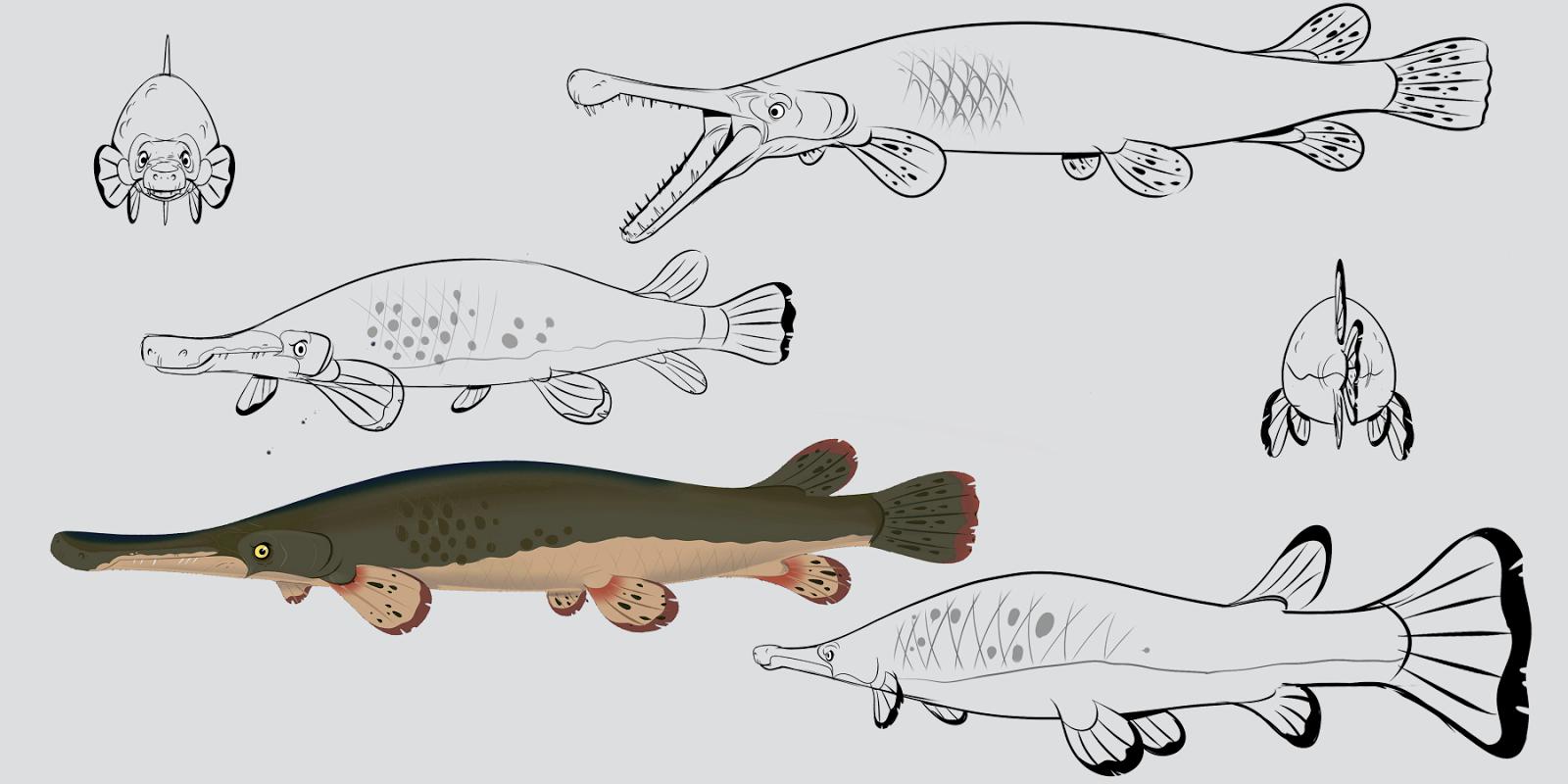 Alan Stewart おしゃれまとめの人気アイデア Pinterest Desislava Tanova 魚 種
