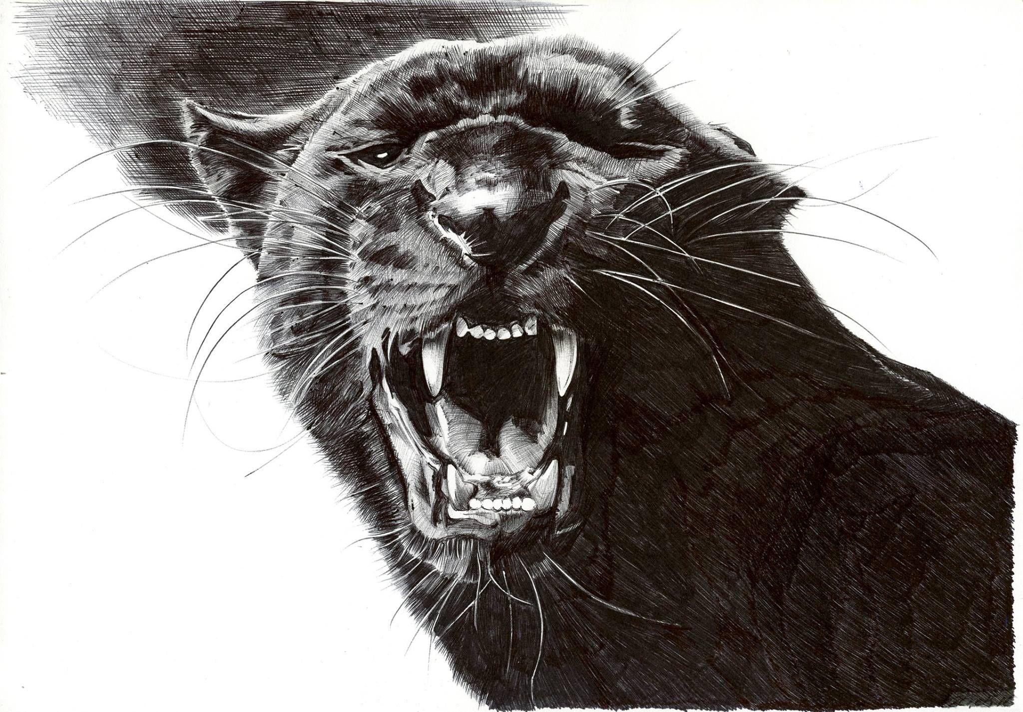 Пантера тату эскиз картинки