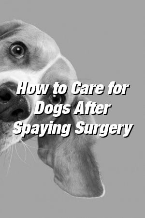 Vanessa Churchill Tells About How to Care for Dogs After Spaying Surgery #dogs#cutedogs#formydog#dogcat#doglove#doglife