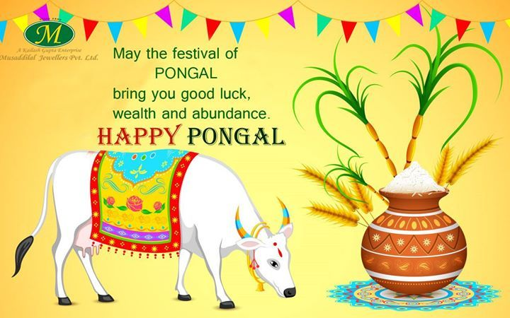 May The Festival Of Pongal Bring You Good Luck Wealth And Abundance