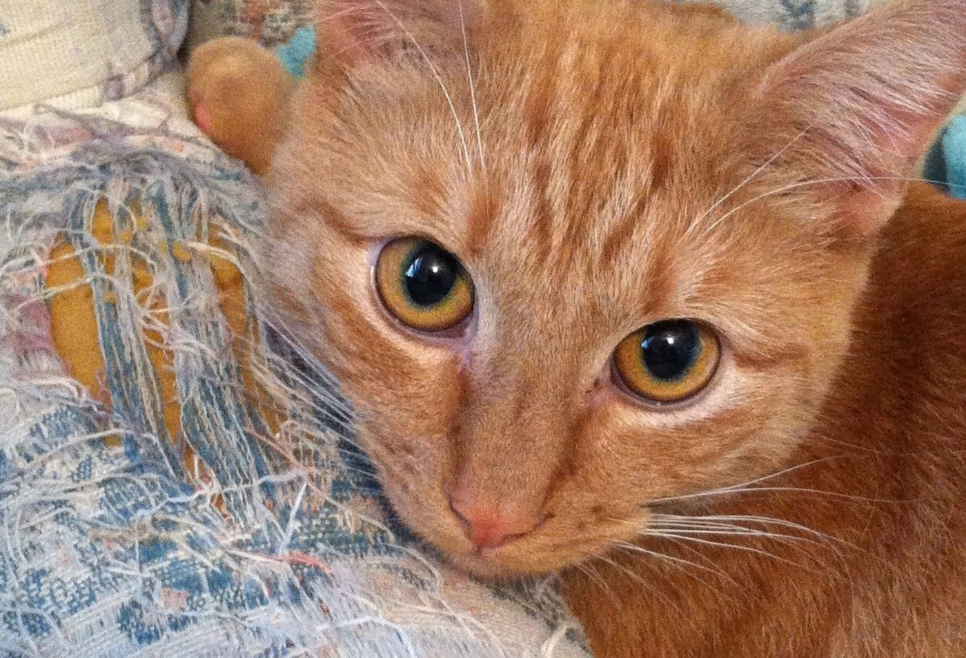 Pin On How To Teach Your Cat Ultimate Cat Secrets