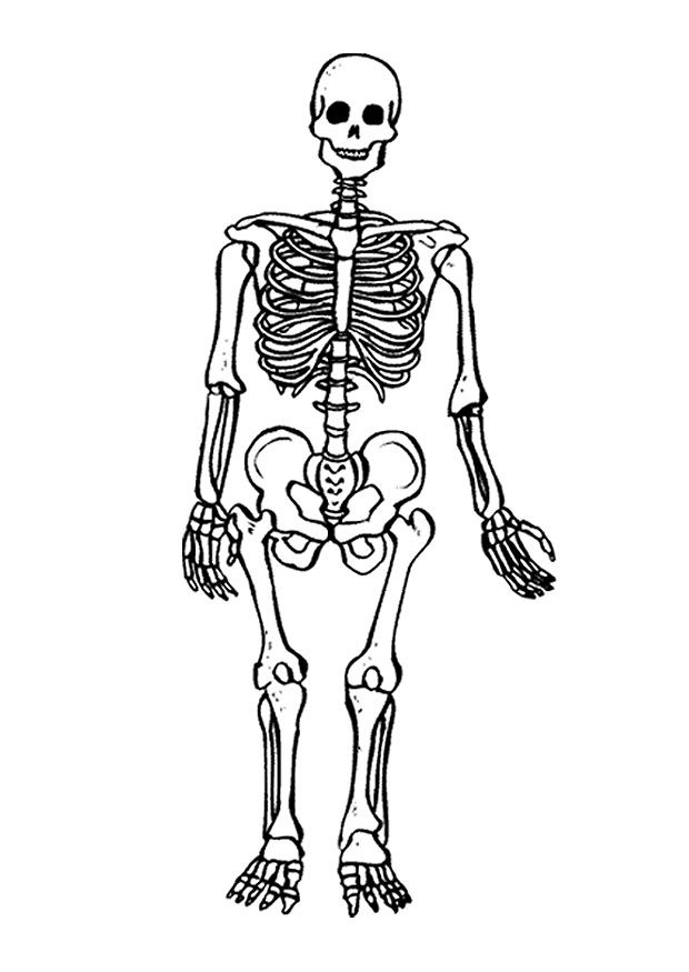 free printable skeleton coloring pages for kids | coloring, Skeleton