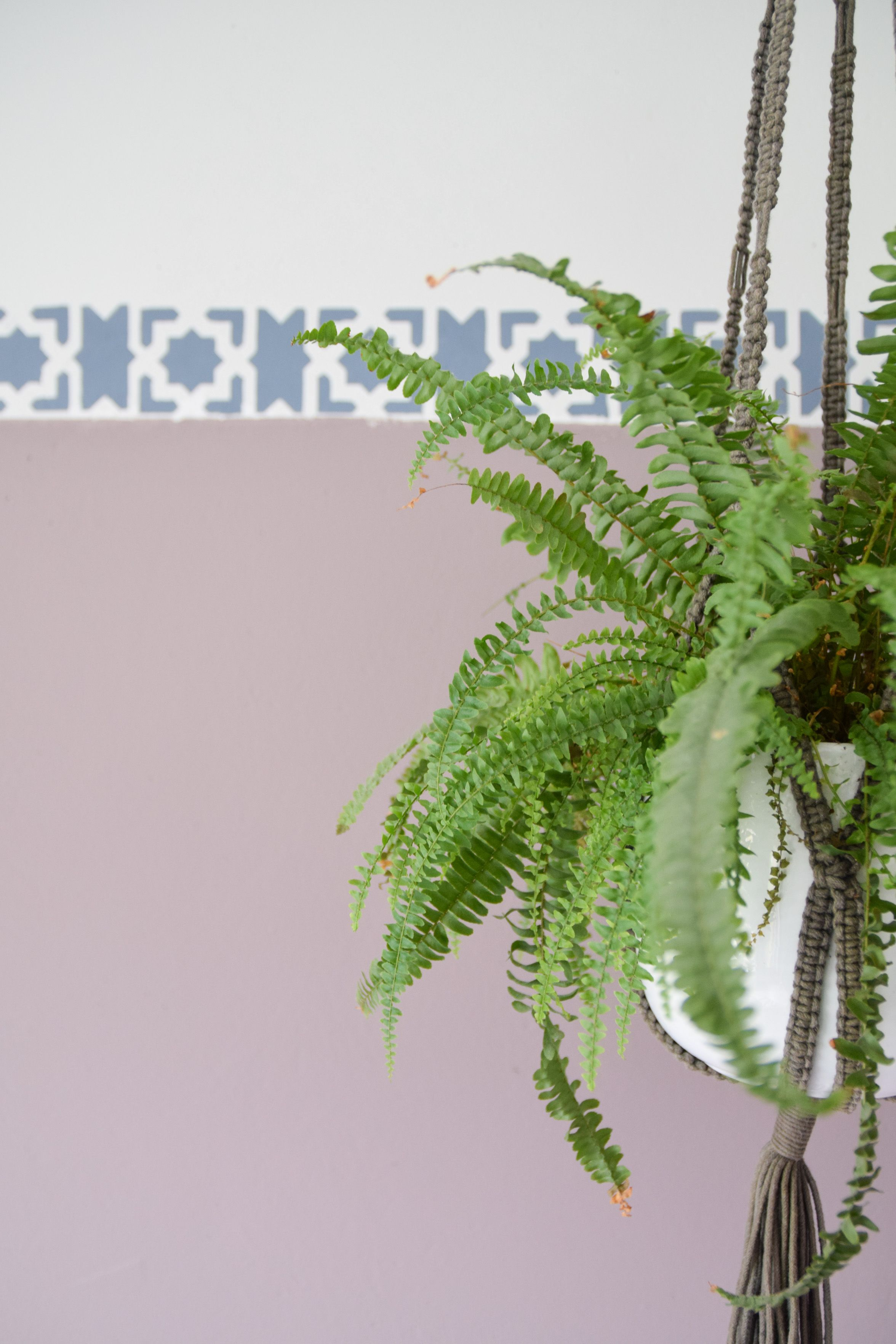 Heart Wood is the perfect backdrop for your urban jungle Flexa