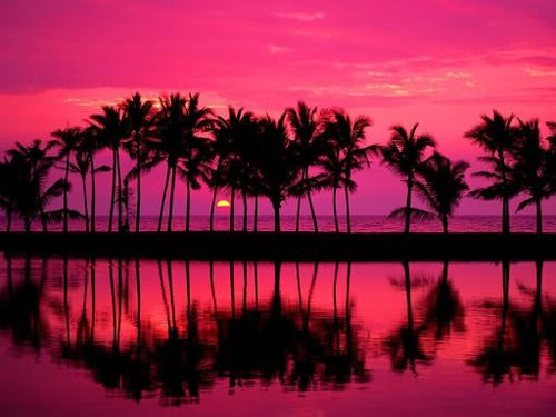 Beautiful sunset in the palm trees' reflection on water.