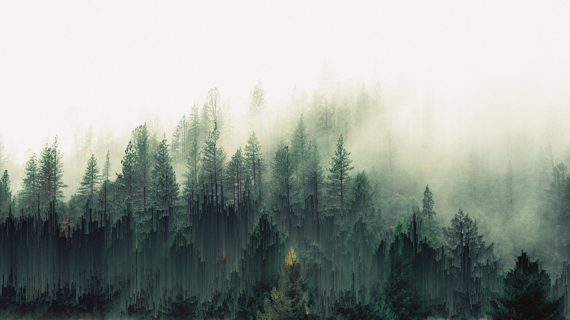General 1920x1080 Forest Trees Mist Pixel Sorting Forest Photos Forest Photography Foggy Forest