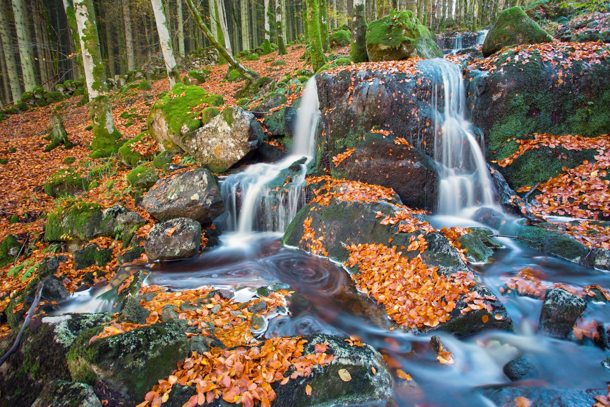 leaves and waterfall wall mural paisajes pinterest ux ui leaves and waterfall wall mural