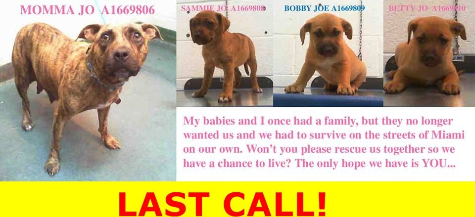 Safe Last Call For A Family Jo And Her Babies Came In Together If You Are Rescuing The Pups Please Find A Place For Mom Rescue White Labrador Pet Life