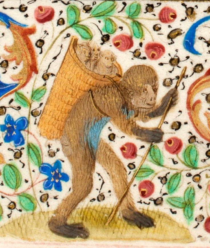 Basket o'monkeys, from Trivulzio Book of Hours, 1400s. Koninklijke Bibliotheek