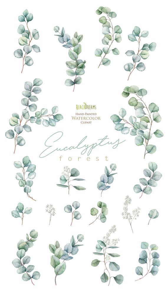 Eukalyptus. Aquarell Floral Clipart. Einzelne Elemente. Grüne Blätter, Blatt, grün, wild, Hochzeit, Braut, Zweig, Wald, digitale Png