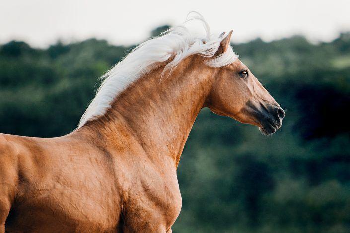 Fotos Pferde In Der Natur I Anna Ibelshauser In 2020 Pferde Hubsche Pferde Schone Pferde