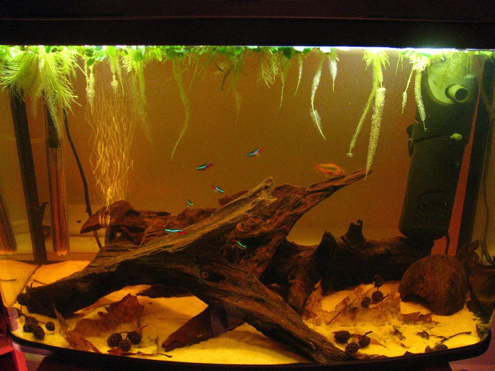 Frais De Aquarium Tropical Sch¨me Idées de table