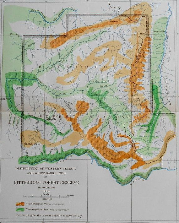 1900 Map Bitterroot Forest MT Montana Dixie Elk City Harpster