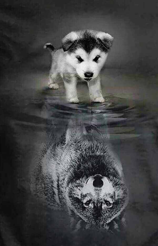De E E Dc C F F B on D Diy Diamond Painting Crystal Animal Needlework Embroidery Wolves