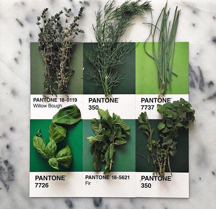 Resultado de imagen de pantone collage willow