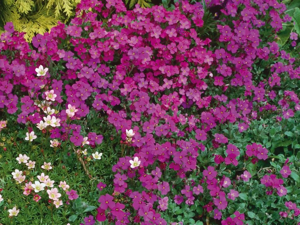 Perennial plants for winter spring perennial flowers floral the bold colors and leaves on these perennials will take you from the chill of winter to the sunshine of spring mightylinksfo