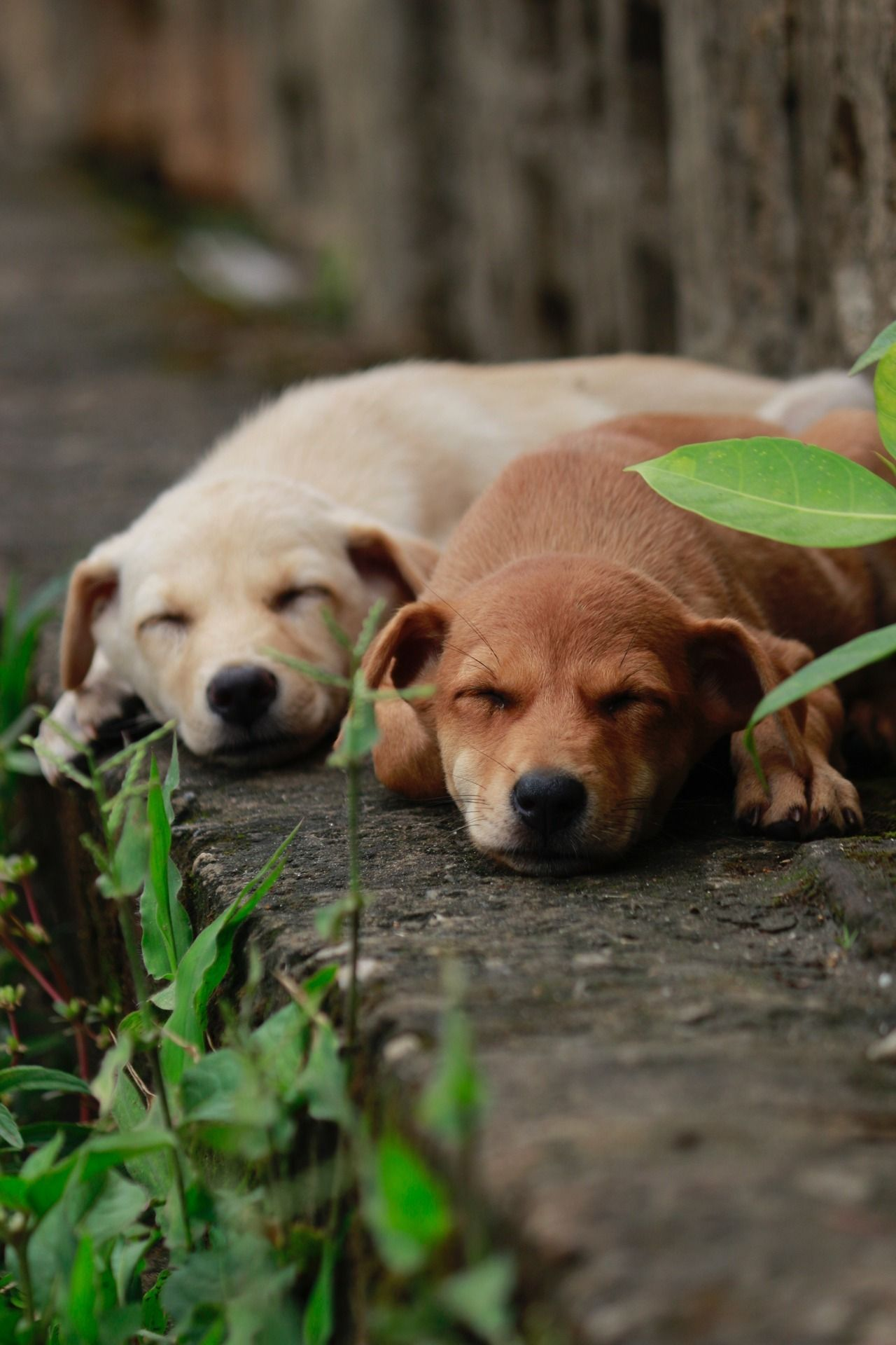 perros dogs 🐶 Perros durmiendo, Amantes de perros