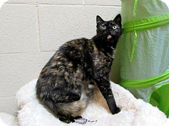 Lewisburg, WV - Domestic Shorthair. Meet Maribel, a cat for adoption. http://www.adoptapet.com/pet/12823153-lewisburg-west-virginia-cat