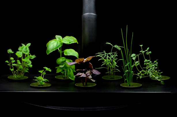 Historical Roots 6 Types Of Hydroponic Gardening Systems 400 x 300