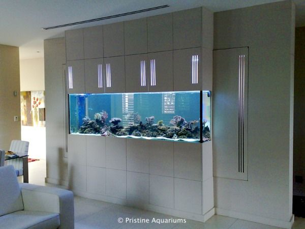 Wall aquarium access google search aquariums for Fish tank in wall