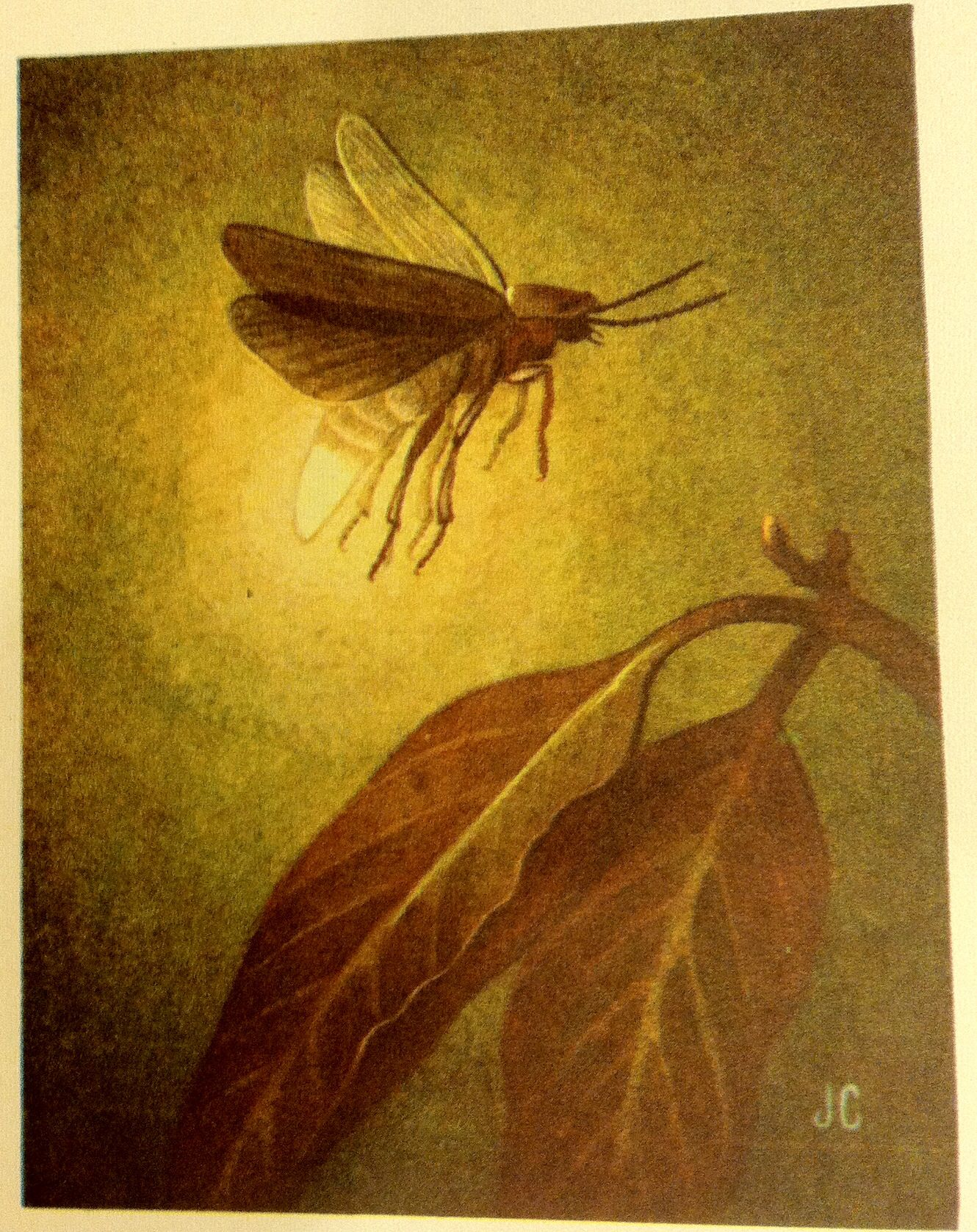 Vintage lightning bug illustration | Bugs are Cool and ...