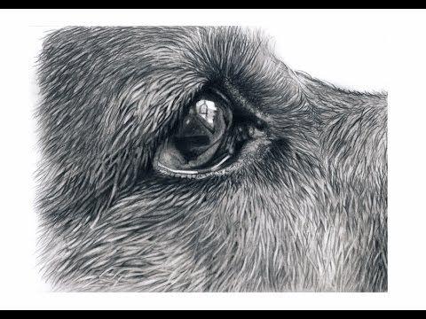 How To Draw German Shepherd Eyes - YouTube   Art in 2019