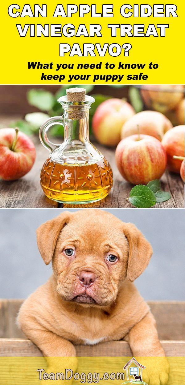 Apple Cider Vinegar for Parvo Do's Don'ts and Dosage