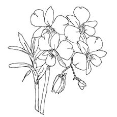 10 Beautiful Orchid Coloring Pages For Your Toddler Animal