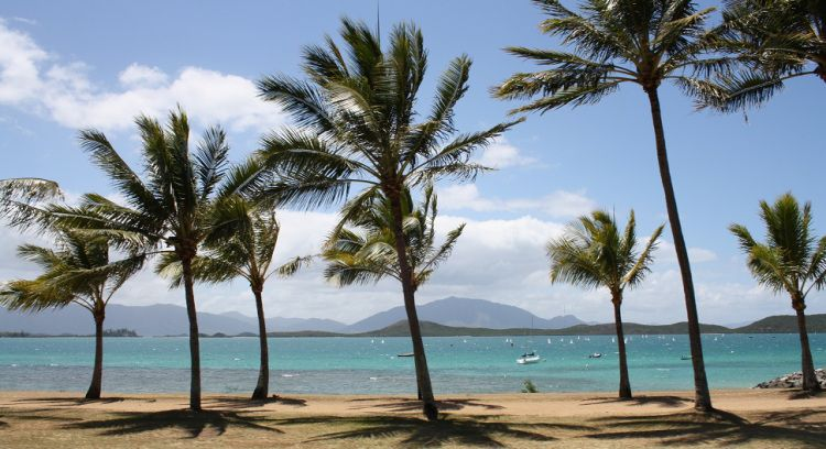 Travel pictures of Noumea, palm trees & beach