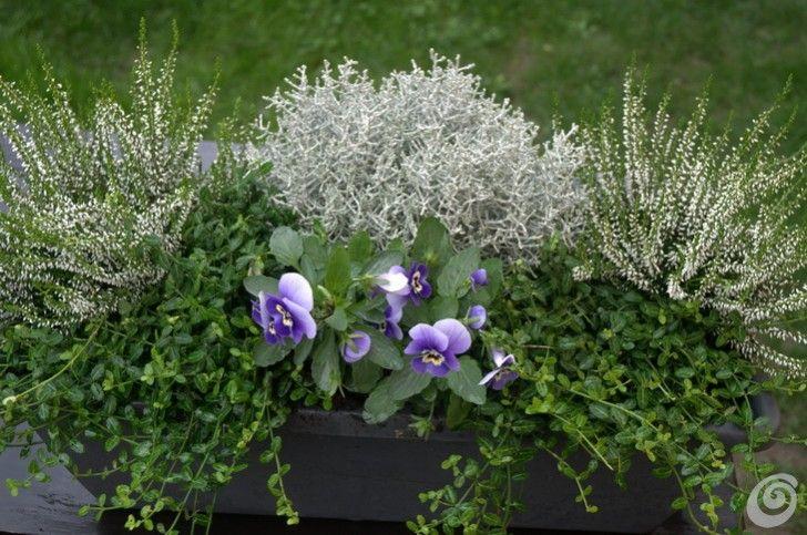 Soluzioni le fioriere invernali per il balcone e il - Fiori invernali da esterno perenni ...
