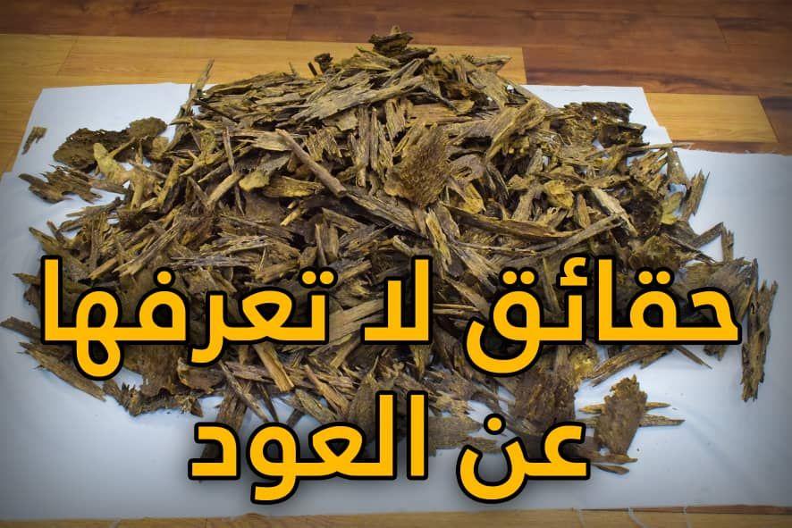 معلومات عن العود Wood Arabi