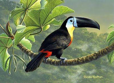 Pintura y Fotografía Artística : Coloridas Aves Silvestres En Cuadros, Pintura…