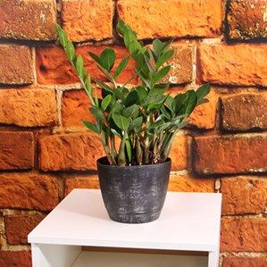 Pin Now Plant Later Home And Garden Inspiration From